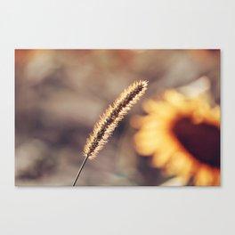 Sunflower Sunsets Canvas Print