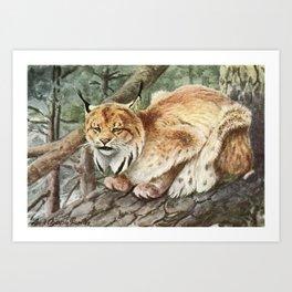 Fuertes, Louis Agassiz (1874-1927) - Burgess Animal 1920 (Lynx) Art Print