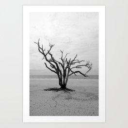 Botany Bay 2 Art Print