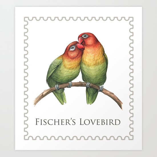 Fischer's Lovebird (Agapornis fischeri) Art Print