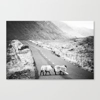 irish Canvas Prints featuring Irish Sheeps by GF Fine Art Photography