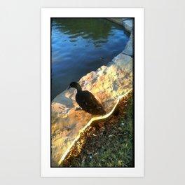 Black Duck Art Print