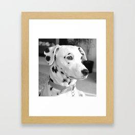 Spotty Dotty Dalmatian Dog Framed Art Print