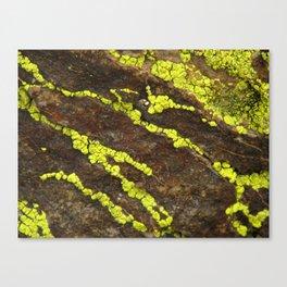 Joshua Tree Lichen - RMD Designs  Canvas Print