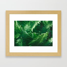 Macro photography of a fern in a tropical forest. Nature background. Framed Art Print