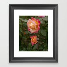 Two Garden Roses Framed Art Print