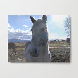#406 horse bitterroot mt Metal Print