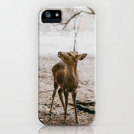 Nara, Japan Deer Fawn iPhone Case