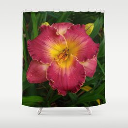 Sis Boom Bah daylily! A world of rose and gold Shower Curtain