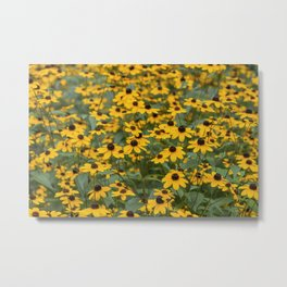 Field of Brown Eyed Susans Metal Print
