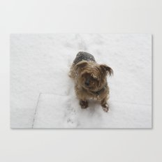 Snowy dog Canvas Print