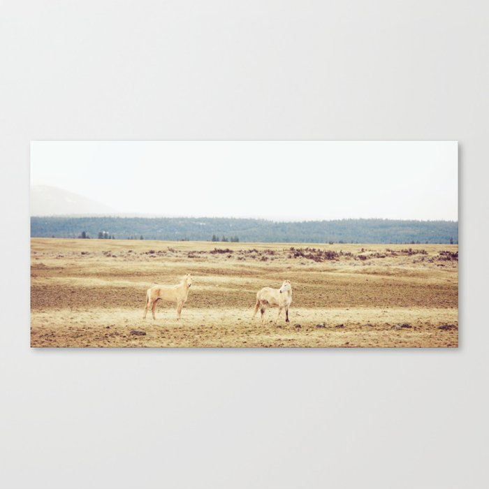 Two Oregon Horses Canvas Print