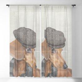 Elegant Mr. Dachshund Sheer Curtain