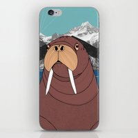 walrus iPhone & iPod Skins featuring Walrus by Diana Hope
