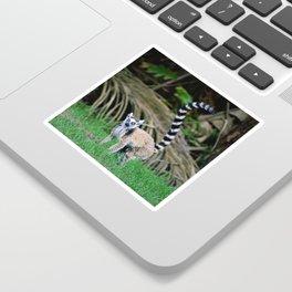 Madagascar's Exotic Ringtail Lemur Sticker