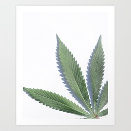 Cannabis Leaf Closeup Art Print