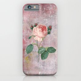Vintage & Shabby Chic - Rose on pink grunge background  - Roses and flowers garden iPhone Case
