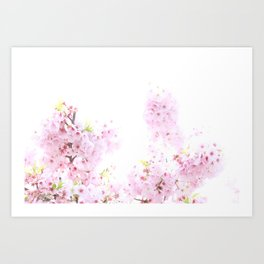 Cherry Blossoms 2 Art Print