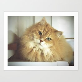 Siberian cat. Portrait of Mr. Cesare Art Print