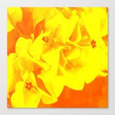 Ali orange Canvas Print