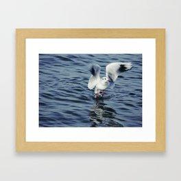 Ready to fly ... Framed Art Print