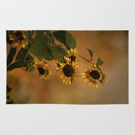 Origin Of Sunflowers  Rug