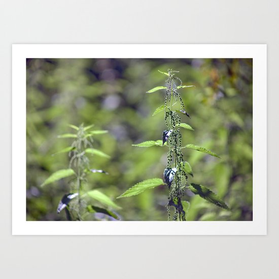Stinging Nettle 5288 Art Print