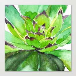 green succulent 3 Canvas Print