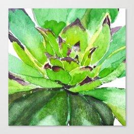 green succulent 3 Canvas Print