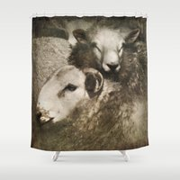 sheep Shower Curtains featuring Sheep by John Beswick