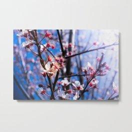 Blooming spring Metal Print