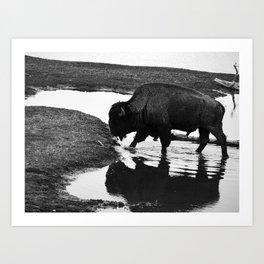 Reflect Like A Buffalo  Art Print