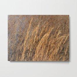 Golden Grass Metal Print