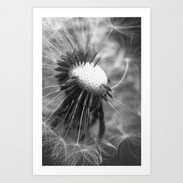 Dandelion 2013 no.5 Art Print