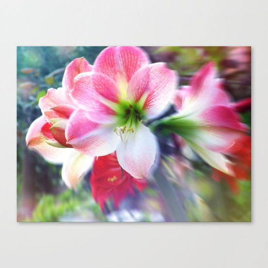 Atmospheric Amaryllis Canvas Print
