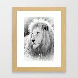 White Lion Male Portrait Framed Art Print