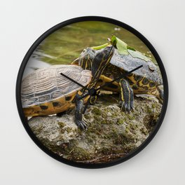 two cute turtles rest at sun on pond Wall Clock