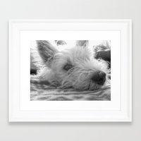 westie Framed Art Prints featuring Westie puppy by  Alexia Miles photography