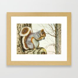 Fuertes, Louis Agassiz (1874-1927) - Burgess Animal Book for Children 1920 (Grey Squirrel) Framed Art Print