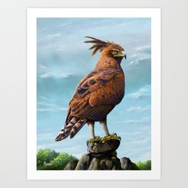 Long Crested Eagle Art Print