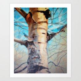Bark of the Aspen Art Print