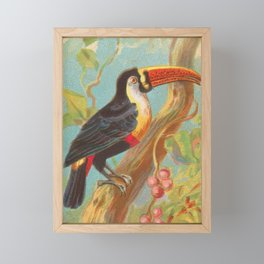 Toco Toucan Birds of the Tropics Series by A&G Framed Mini Art Print