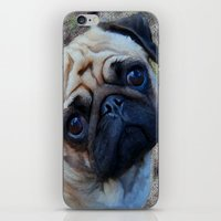 pug iPhone & iPod Skins featuring Pug by Crayle Vanest