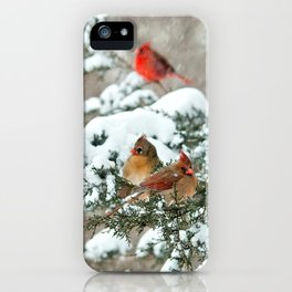 After the Snow Storm: Three Cardinals iPhone Case