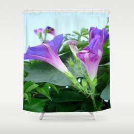 Purple and Pink Budding Bindweeds Againt Leaves Shower Curtain