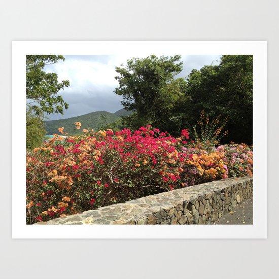 Peter Bay, St. John, US Virgin Islands, flowers, stonewall Art Print