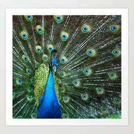 awesome peacock Art Print