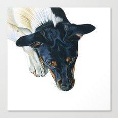 Swedish farm dog Canvas Print