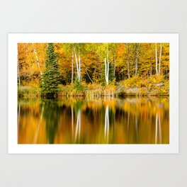 Autumn Reflections - Birch trees on Lake Plumbago Art Print