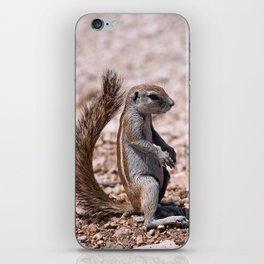 Just sit down - Squirrel, Africa wildlife iPhone Skin